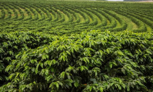 demarcacao terras indigenas ministerio agricultura