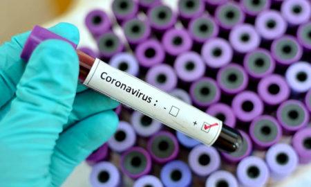 vacina contra coronavirus pode ser testada em humanos ja em setembro